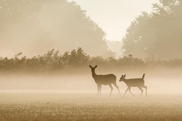 The wildlife is plentiful and beautiful.