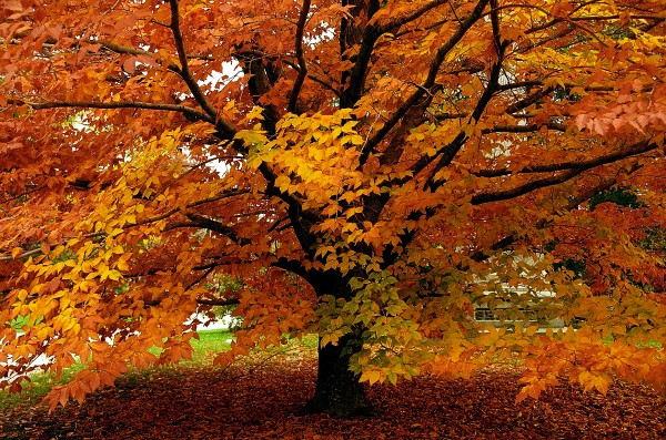 There's nothing like Ohio's Fall foliage.
