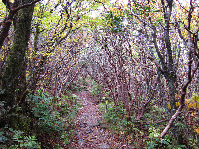 16. Craggy Bottoms Trail is straight out of a fairytale. It leads to breathtaking views of the Blue Ridge Mountains.