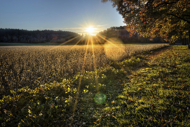 9. Fields of setting sun