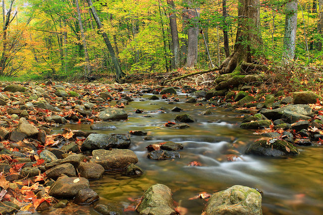 Jacobsburg State Park, near Allentown, holds the mysteries of the forest. Dense foliage, babbling brooks, and wildlife that rustles through the leaves wait for you here.