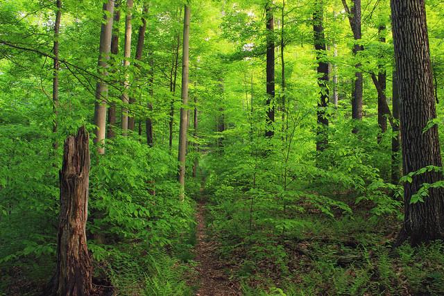 3. Susquehannock State Forest