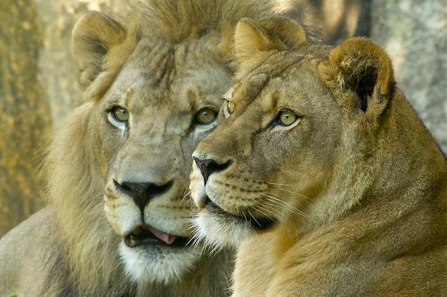 14. Get 'wild' at The North Carolina Zoo