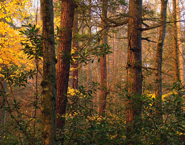 7. Alan Seeger Natural Area, Rothrock State Forest, Huntingdon County