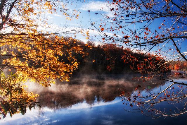 "7. ""Price Lake Sunrise Between the Leaves"" by Matthew Paulson"