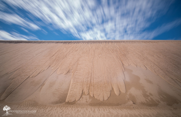 22. NC is home to its own mini-desert at Jockey's Ridge, the largest active sand dune on the east coast.