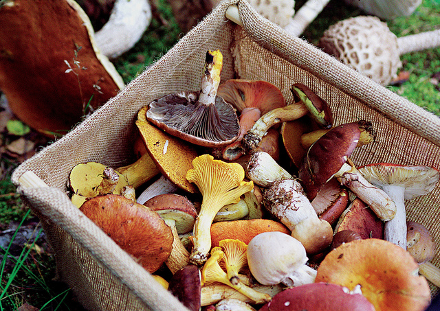 9. Kennett Square is the mushroom capital of the world.