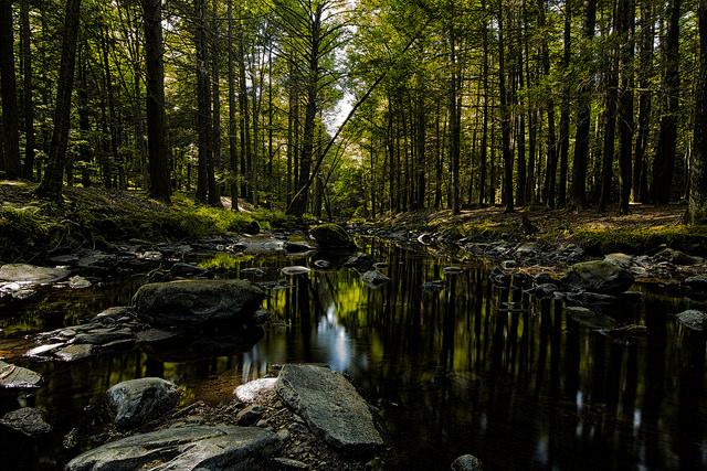 9. Dingmans Ferry Creek Trail, Pike County