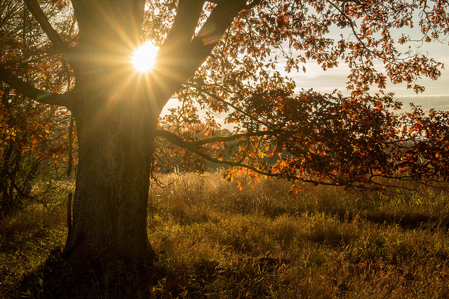 9. The sun peeks out from behind a tree towards the end of the day on the Hildacy Farm Preserve in Media.