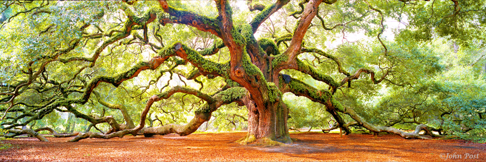 Angel Oak Only In Your State