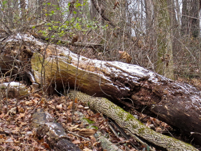 10) 4.5 miles of popular hiking fodder is found on Mossy Ridge Trail, located just south of Nashville.