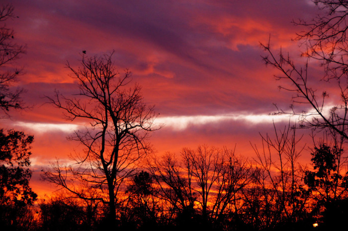 19. Red and Purple Silhouette in Fauquier County, Catlett