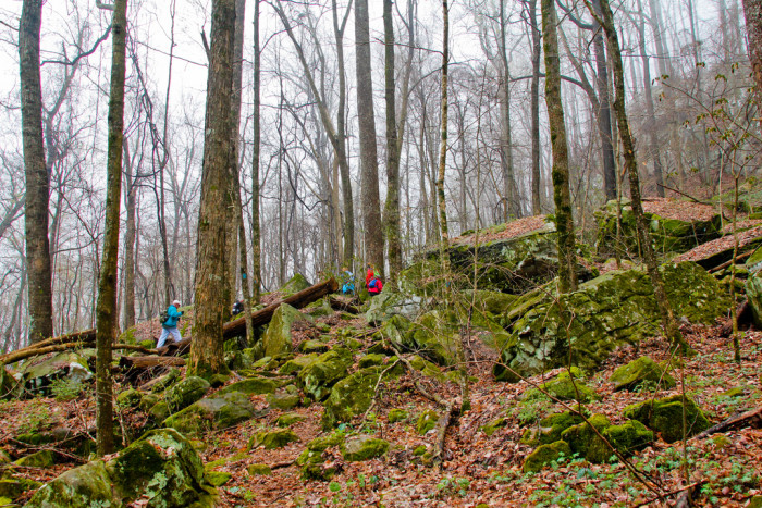 14) The Perimeter Trail is a popular hiking spot in Sewanee, and with 13,000 acres of vibrant forest and outdoor opportunity you can create your own perfect day.
