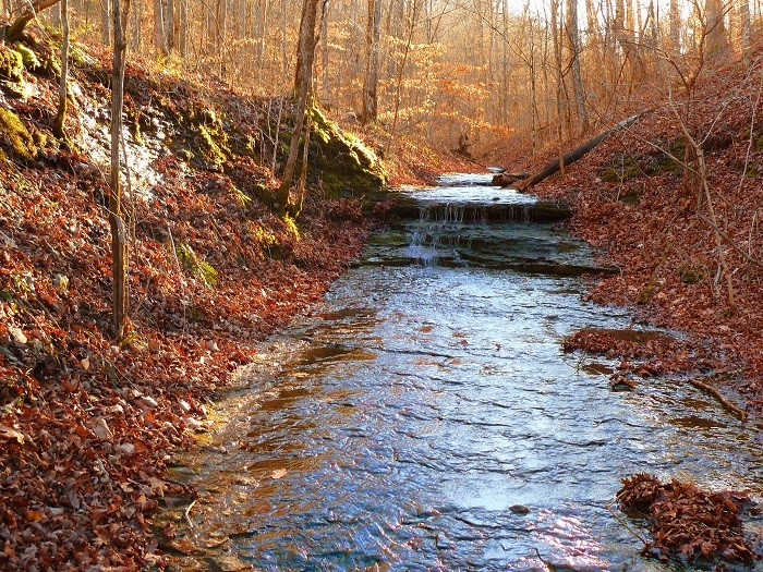 2) Beaman Park is a hidden wonder at the northwest edge of Nashville, and you can choose from 3 trail heads and 5 miles of trail.