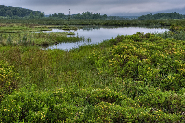 13) The Canaan Valley National Wildlife Refuge, located in Davis. WV.