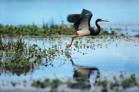 5) Low Country marshes of Kiawah Island, SC: Home to so much wildlife, this is a birdwatcher's treat. However, I would stay away from them in the high heat of summer.
