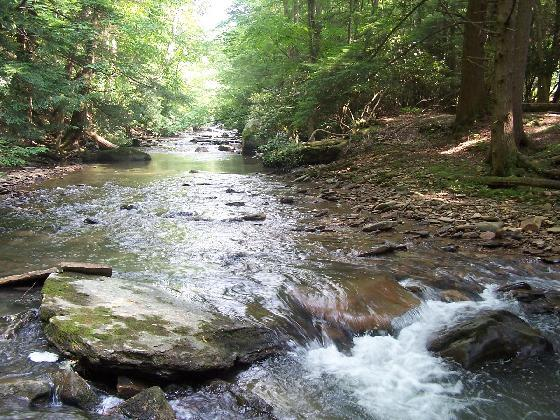 9) The Holly River is about 3.9 miles, the Left Fork Holly River is about 24.1 miles long, so 28 miles all together.