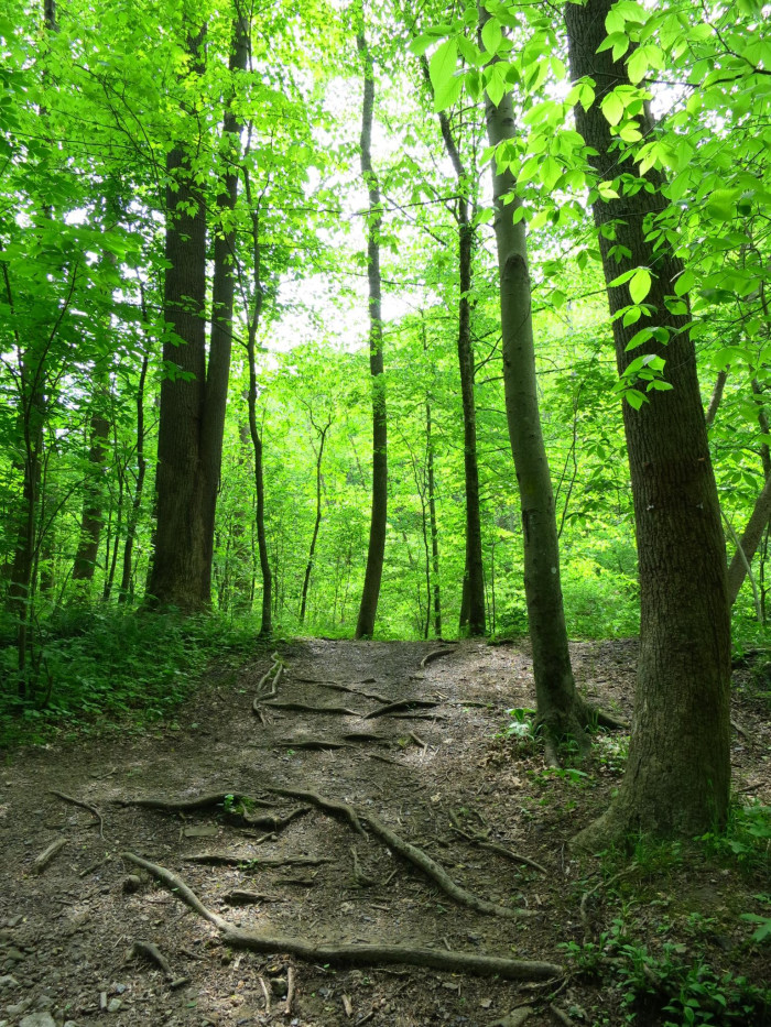11) The beautiful Kanawha State Forest is located just outside of the capitol city, Charleston.