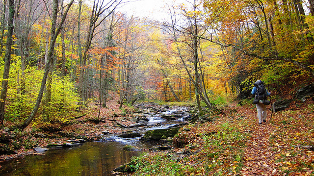 8) Located in the Monogahela National Forest is the Seneca Creek Trail, which is in Riverton, WV.