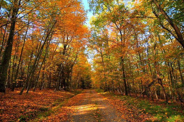 15) Seneca State Forest, located in Dunmore, WV.