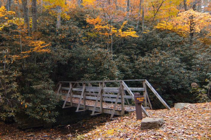 Watoga State Park is the largest of West Virginia's state parks. This park covers over 10,000 acres and is full of things to do, from renting a cabin to hiking trails to fishing.