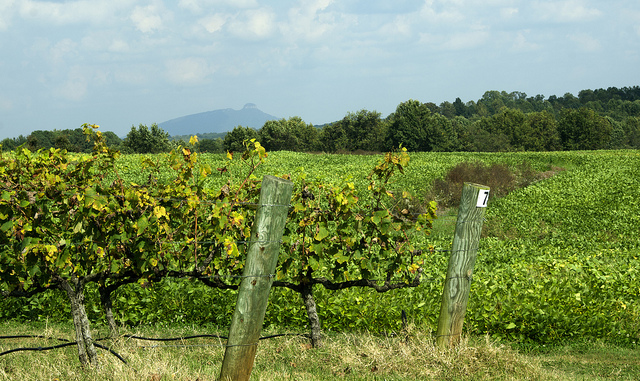 5. Take a winery tour of Yadkin Valley.