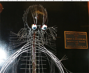 1. Harriet Cole's Nervous System, Philadelphia