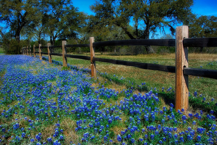 13) There's nothing quite like seeing beautiful patches of bluebonnets growing on the sides of the highways.