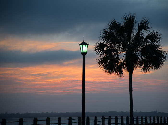 16. We have more interests than just Palmetto trees.