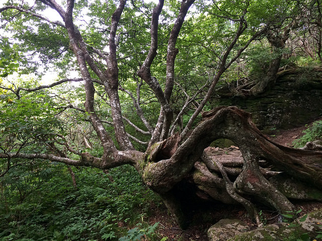 14. Love is a fairytale at Craggy Gardens Trail.