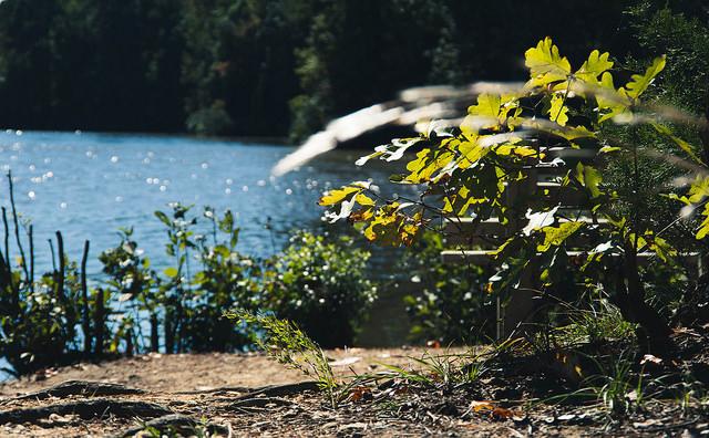 20. Lake Lynn