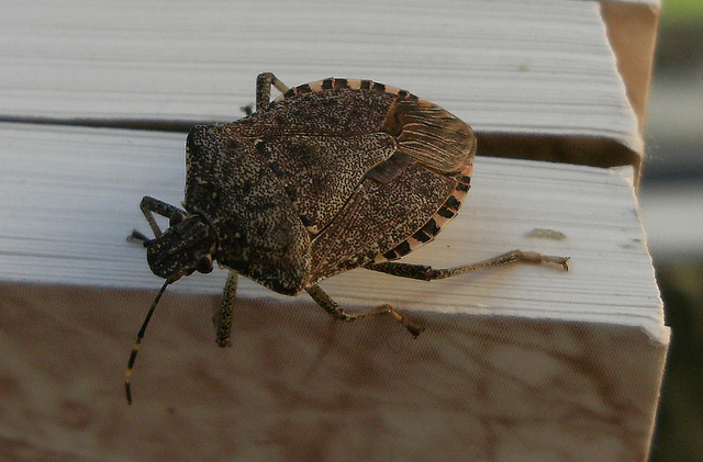 16. Stink bugs: THEY'RE TAKING OVER THE WORLD.