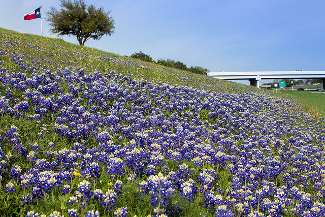 6) Bring a blanket and picnic to any field of bluebonnets you can find for the most perfect first date deep in the heart of Texas.