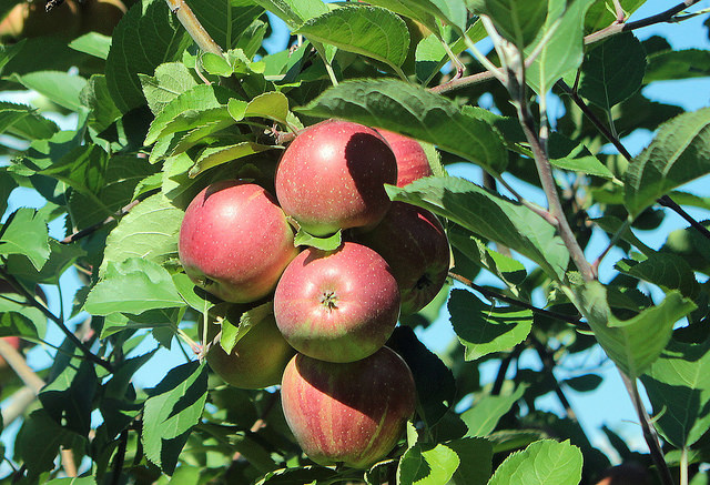 17. Your elementary school education included at least three field trips to Philadelphia, two field trips to farms, and at least five million field trips to go apple picking.