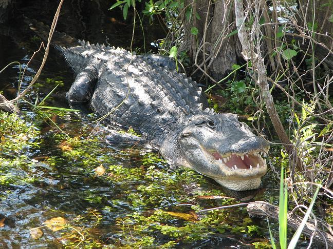 8. The Everglades