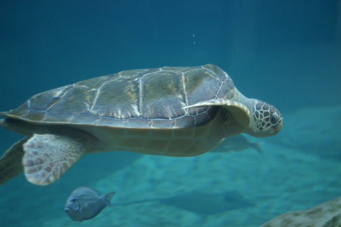 3) Columbus Zoo and Aquarium and Zoombezi Bay Water Park—where you can have fun with the animals and fun in the sun.