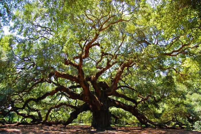 5. The Angel Oak