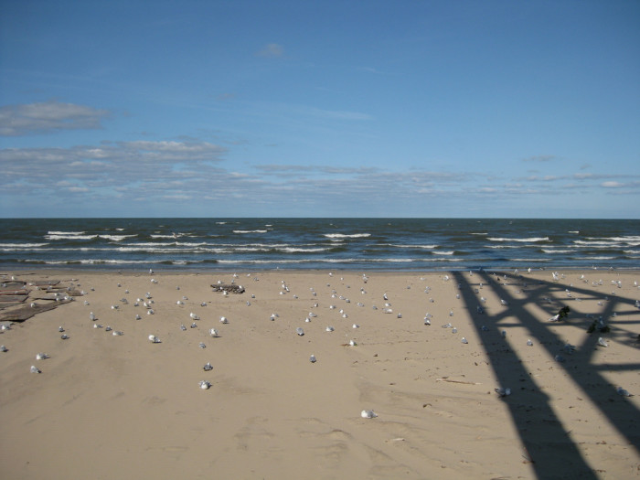 5) A day on the shores of Lake Erie is the closest you can get to a day at the beach in Ohio.