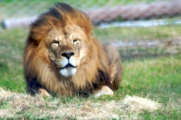 9. Lion Country Safari