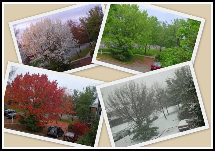 1) Each year you will always, without a doubt, get to experience all four seasons (even if they occur unevenly or out of sequence. Which, they will.)