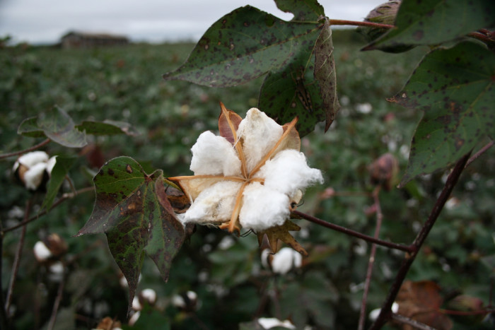 5. We are not only cotton and soybean fields.