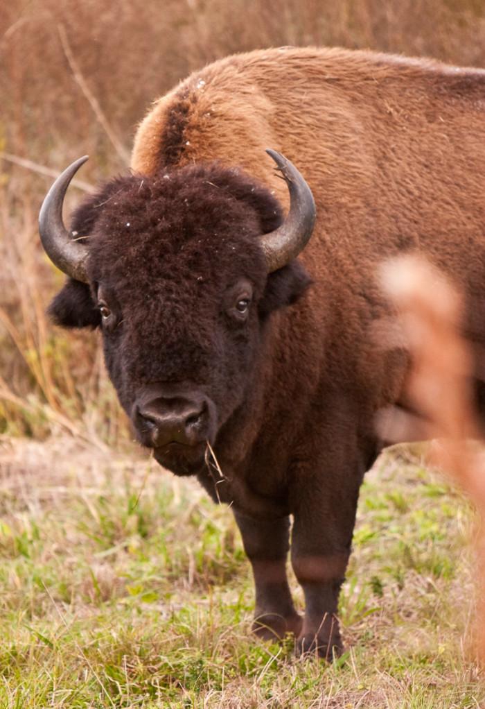 3. Paynes Prairie Preserve State Park