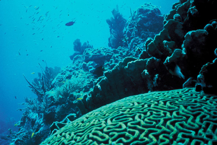 13. Check out the coral reef.