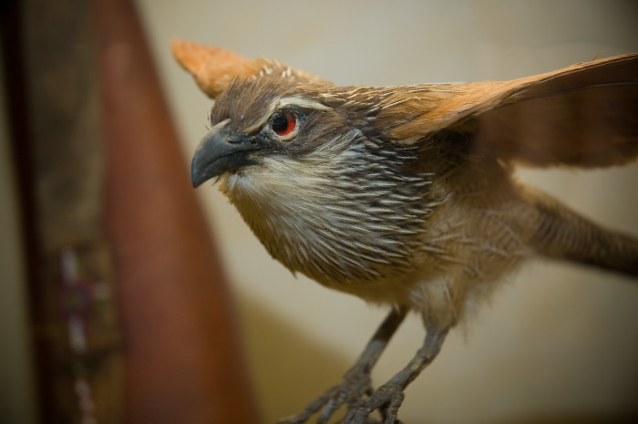1. Museum of York County-Taxidermy Paradise
