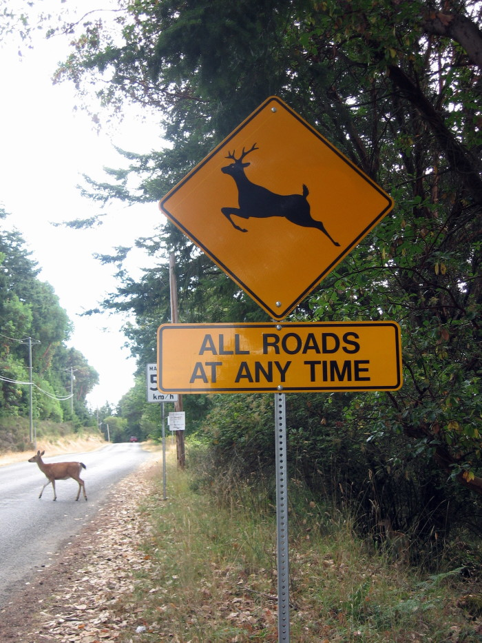 10) Always scan the road ahead and surrounding woods for deer. ALWAYS.