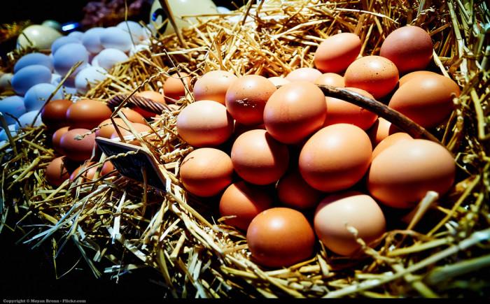 4. Egg Fertilization