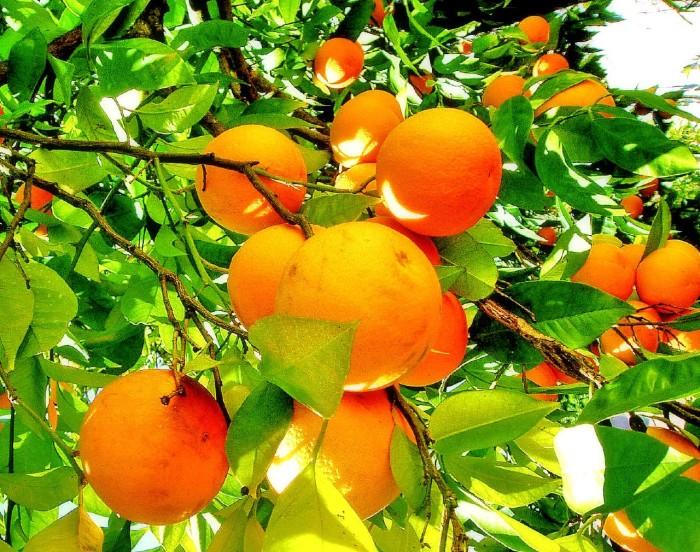 4. Lots of Vitamin C