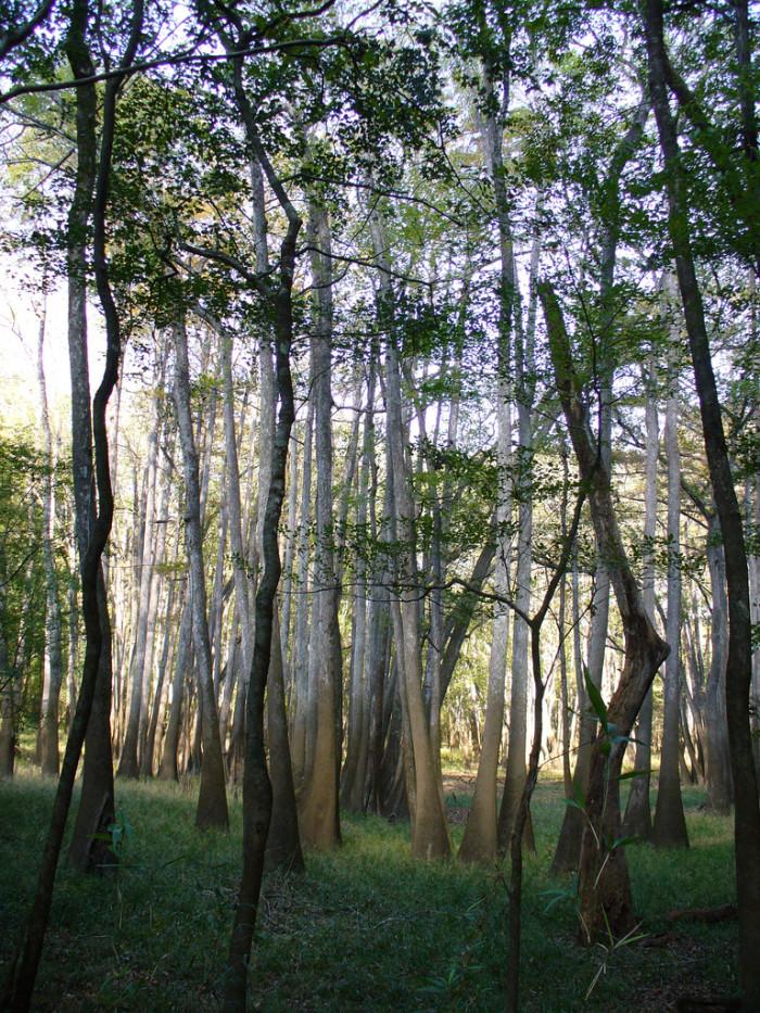 8. Torreya State Park