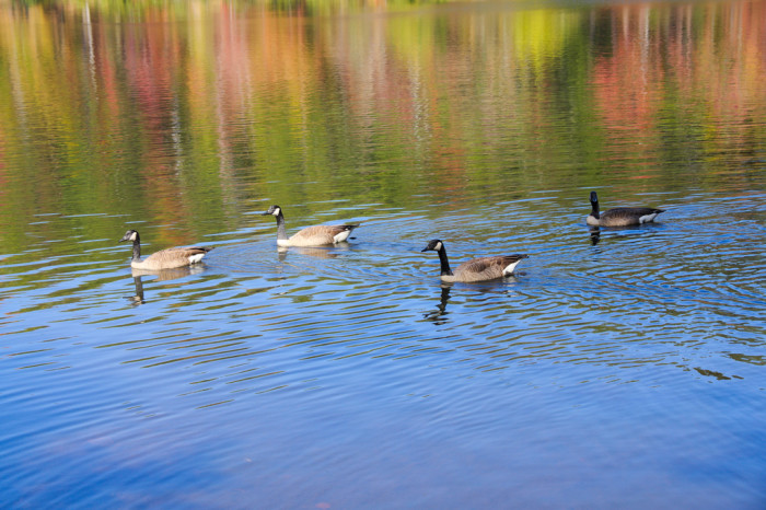 12.  Lake Placid