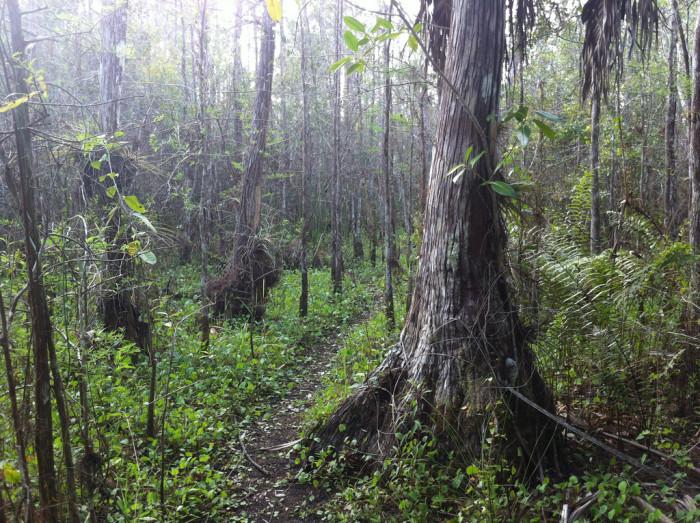 11. Collier-Seminole State Park